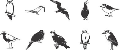 Sketches of birds. Black and white sketches of birds stock illustration