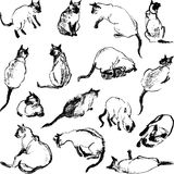 Sketches cat Royalty Free Stock Photography