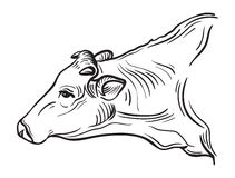 Sketches of cows drawn by hand Royalty Free Stock Photography