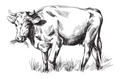 Sketches of cows drawn by hand Stock Photography