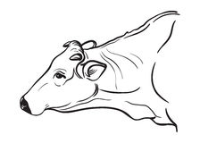 Sketches of cows drawn by hand Stock Images