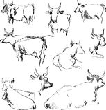 Sketches of the cows. Vector doodles of the grazing cows Stock Photography