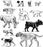 Sketches of different dogs. Vector drawings of the dogs of the various breeds vector illustration