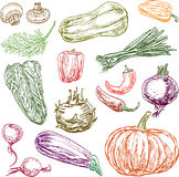 Sketches of the different ripe vegetables Royalty Free Stock Images