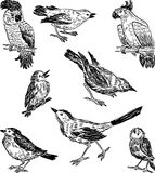 Sketches of the different wild birds. Vector drawings of the birds of the wildlife Stock Photos