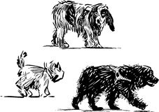 Sketches of dogs. Vector image of the strolling dogs vector illustration