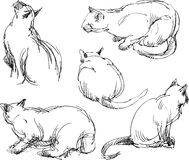 Sketches of a domestic cat Royalty Free Stock Images