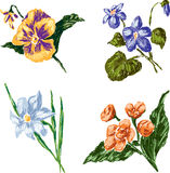 Sketches floral Royalty Free Stock Images