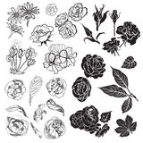 Sketches of flowers Royalty Free Stock Photos
