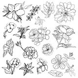 Sketches of flowers Stock Photo