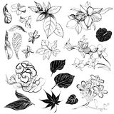 Sketches of flowers Stock Photos