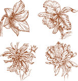 Sketches of the flowers Stock Photo