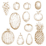 Sketches of fresh harvested fruits Stock Images