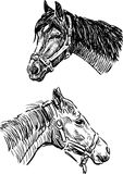 Sketches of the horses heads Royalty Free Stock Photo