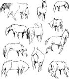 Sketches of the horses Stock Photo