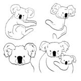 Sketches of koalas on white background. Line arts of koalas vector illustration