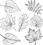 Sketches of leaves Royalty Free Stock Image