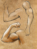 Sketches of muscular hands. And pose showing off biceps. Pencil on paper Royalty Free Stock Image