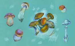 Sketches of mushrooms . Royalty Free Stock Images