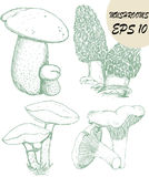 SKETCHES OF MUSHROOMS Stock Images