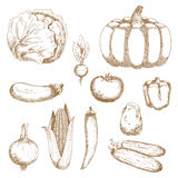 Sketches of organic fresh farm vegetables Royalty Free Stock Image