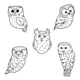 Sketches of owls on white background. Collection of birds in doodle style stock illustration