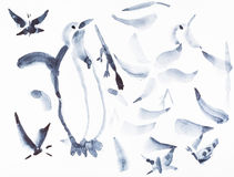 Sketches of penguin and various birds. Training drawing in suibokuga style with watercolor paints - sketches of penguin and various birds on white paper Stock Photos