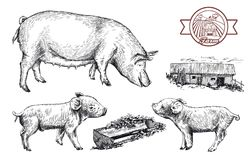 Sketches of pigs drawn by hand. livestock Stock Image