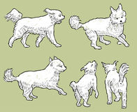 Sketches of a playful terrier. Vector image of a cheerful white lap dog stock illustration