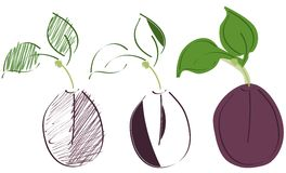 Sketches of plum isolated. Image representing a stylized plum in different versions. a simple idea for projects about this fruit stock illustration