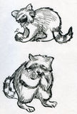 Sketches of raccoons royalty free stock image