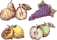 Sketches of the ripe fruit. Vector image of the different fruit Royalty Free Stock Image