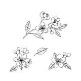 Sketches of spring flowers Stock Images