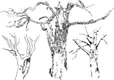 Sketches of trees Stock Photography