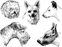 Sketches of the various dogs Stock Images