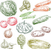 Sketches of the various vegetables Stock Photos
