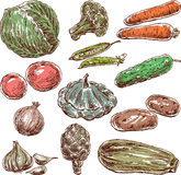 Sketches of the vegetables Royalty Free Stock Photography