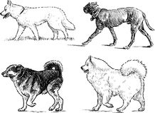 Sketches of walking dogs Stock Photo