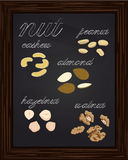 Sketches walnuts, almonds cashews peanuts hazelnuts Royalty Free Stock Images