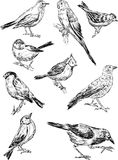 Sketches of the wild birds Stock Photo