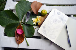 Sketching in contact of nature. Sketching on a moleskine, drawing leaves, petals, fruit and nature Royalty Free Stock Photos