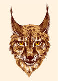 Sketching of lynx. Head of beautiful lynx. illustration with head of wild cat with bared teeth. Hand drawn sketch. Ink painting. Design element useful for print Stock Photography