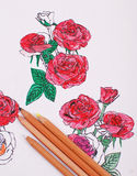 Sketching of Pretty Rose Stock Image