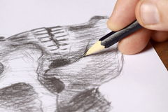 Sketching a skull. Photograph of a skull being sketched royalty free stock photo
