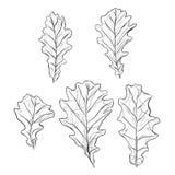 A set of oak leaves. Sketchy black and white oak leaf pattern in outline set of five pieces