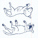Sketchy dogs. Lie on their backs Royalty Free Stock Image