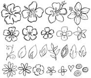Sketchy Doodle Tropical Vector. Sketchy Doodle Tropical Flowers & Leaves Vector Illustration Royalty Free Stock Photo