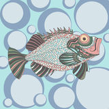 Sketchy fish sea bass in cartoon style Stock Image