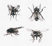 Sketchy flies royalty free stock images
