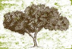 Sketchy oak tree. Sketchy, hand drawn oak tree stock illustration